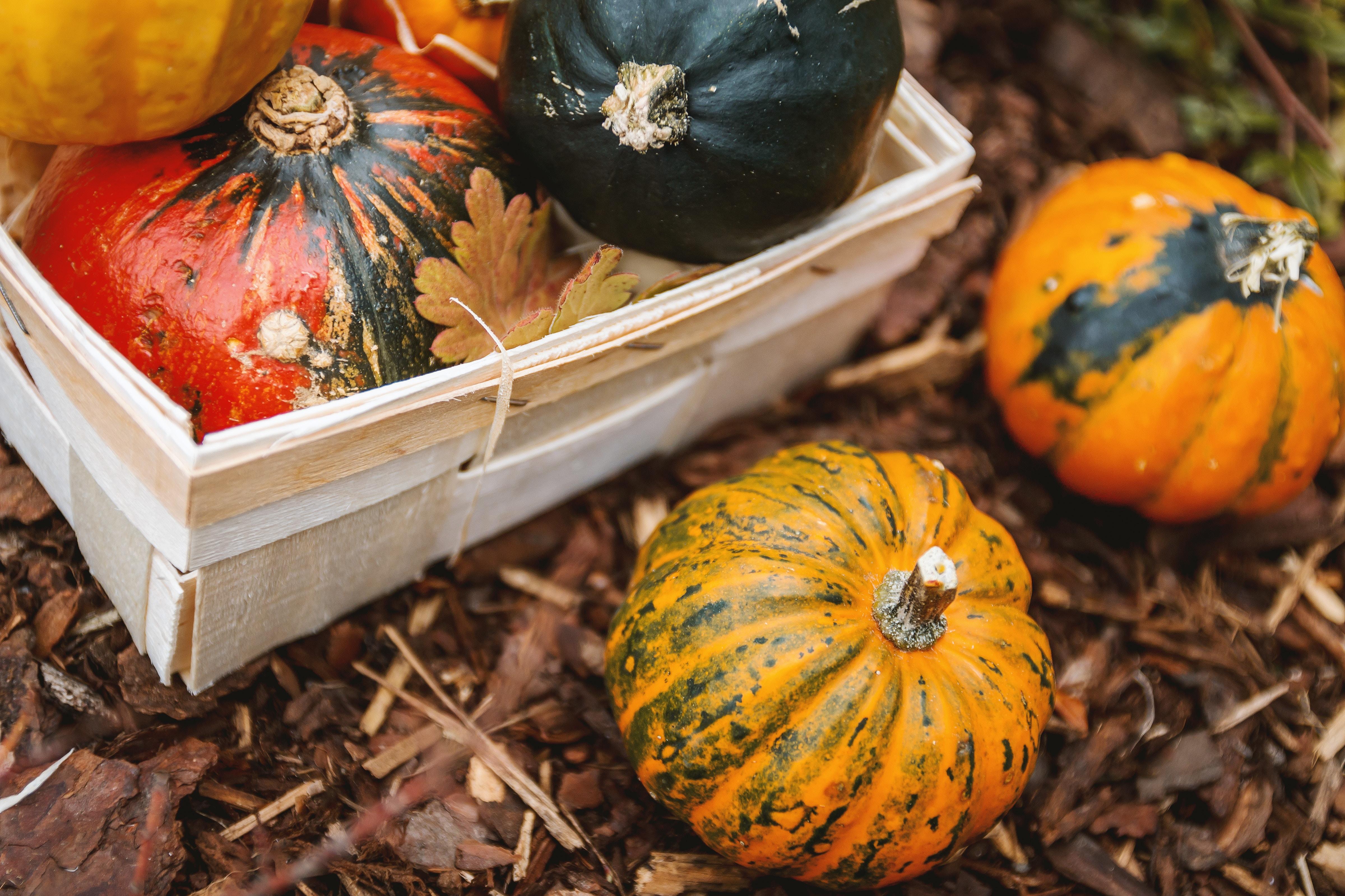 Top 6 jesenných nízkosacharidových receptov, ktoré musíte vyskúšať!